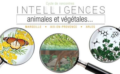 intelligences animales