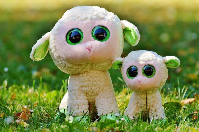 moutons laine chaussettes transhumance