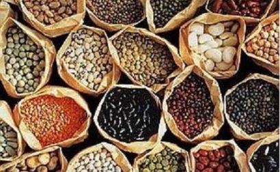 Mycelli'ohm initie à la reproduction des semences