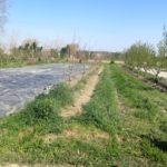 Ferme de la Durette en agroforesterie