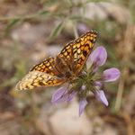 Papillons de Provence au Naturoptère