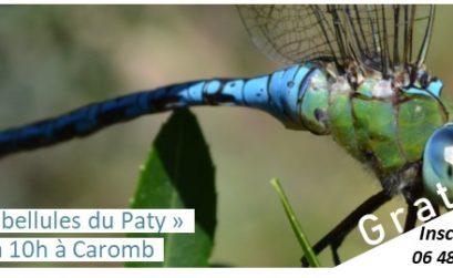 balade à Caromb aux libellules