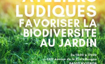 Ateliers ludiques à Avignon avec Semailles