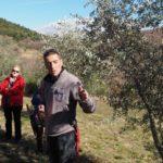 stage maladies des oliviers