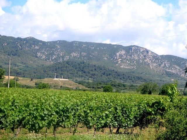 le vignoble Château St Jean aux confins du PNR du Luberon