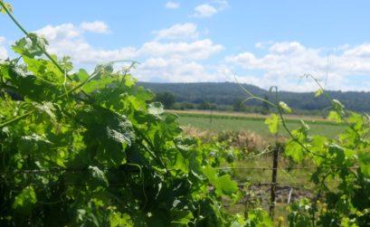 vignes et foncier