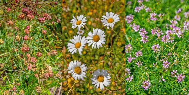 on cultive une large gamme de plantes sauvages