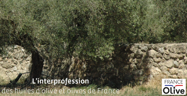 France Olive l asso