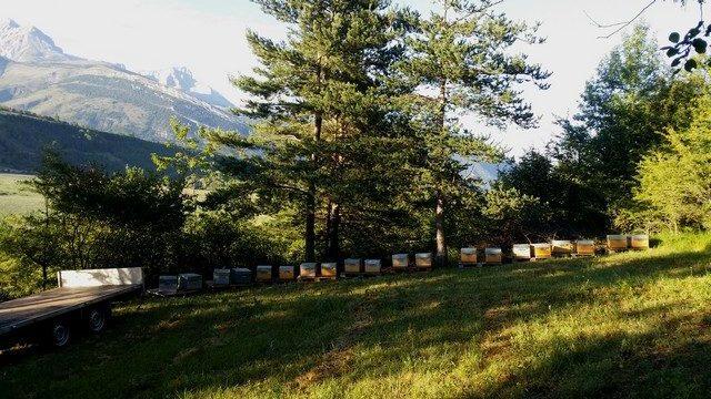 la transhumance des abeilles est réduite