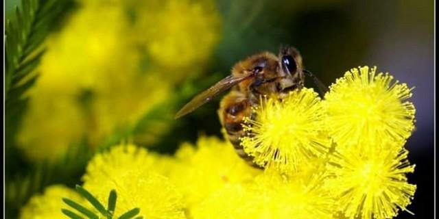 l'apiculteur élève les abeilles