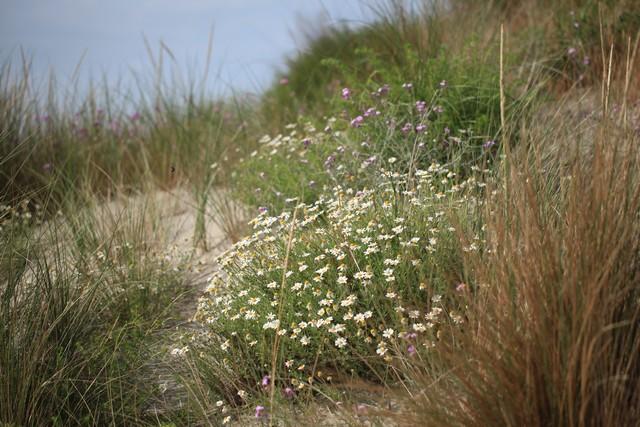 les dunes sont fragiles