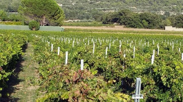 la question du foncier dans les vignes