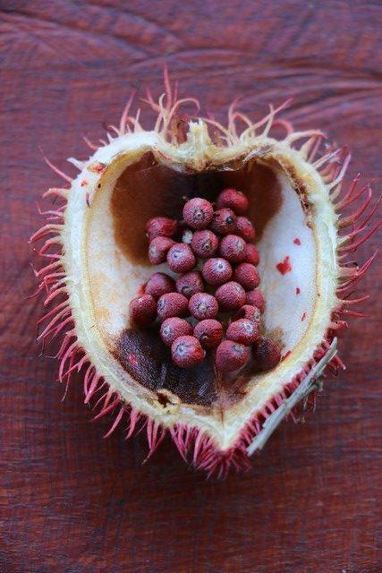 Au Costa Rica poussent des graines d'achiote