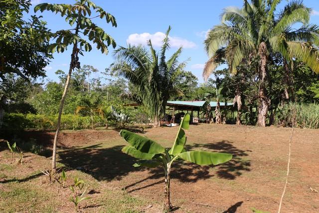Ferme bio au Costa Rica
