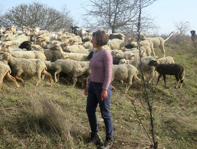 Manon et ses moutons au Calavon