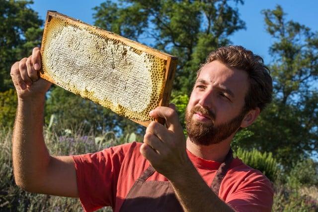 les abeilles pollinisent les amandiers