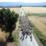 film Sur la route des bergers