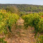 Dracénie Provence Verdon